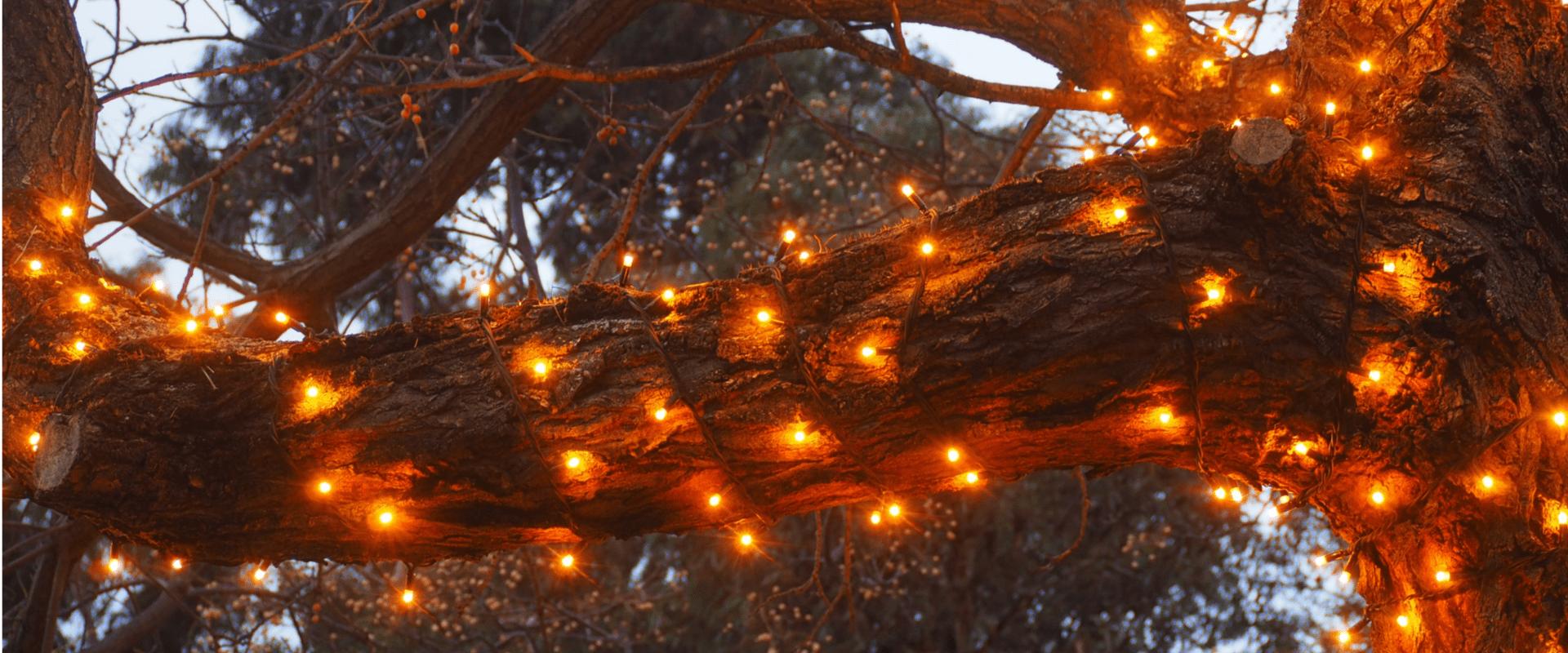 Bright lights on a tree